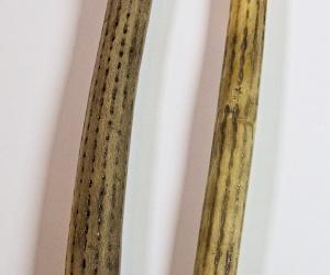 Cactus rainstick 150 cm