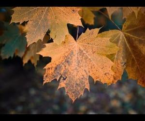 Handpan Leaf C# Mystic